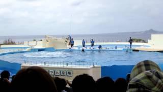美ら海水族館のショー