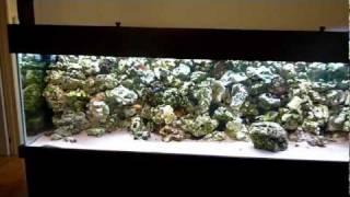 tropheus fish tank aquarium 750l phase 2