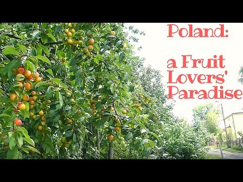 Poland is Simply a Fruit Lovers
