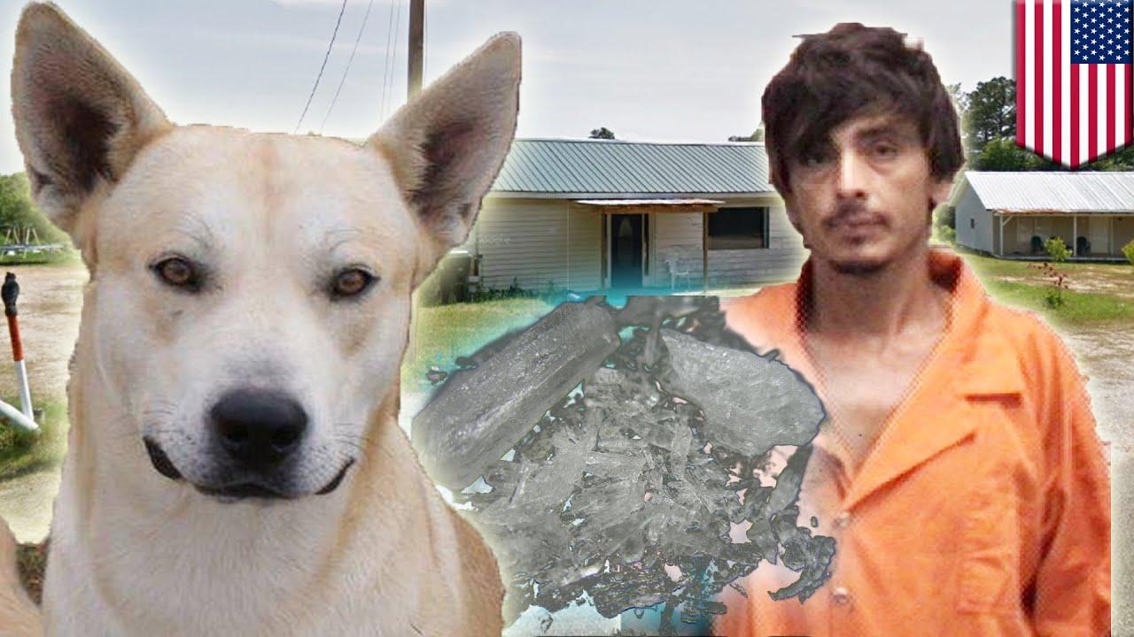 Собака – друг человека? Пёс привёл полицию к своему ...