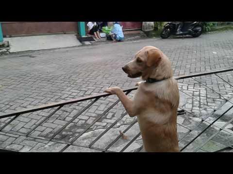 Anjing yang rela menunggu majikannya