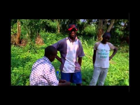 Bangui 2011 ( variétés centrafricaines 2 )