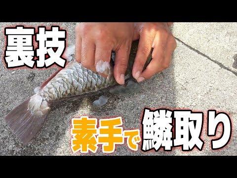 [�撃]魚�鱗を素手�剥��?[渡�喜島�� #2]