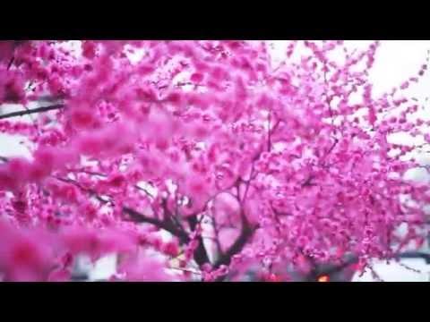 Искусственное дерево Сакура