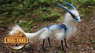 5 BIZARRE CREATURES - real or fake
