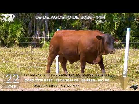 LOTE 22 CORO 2225