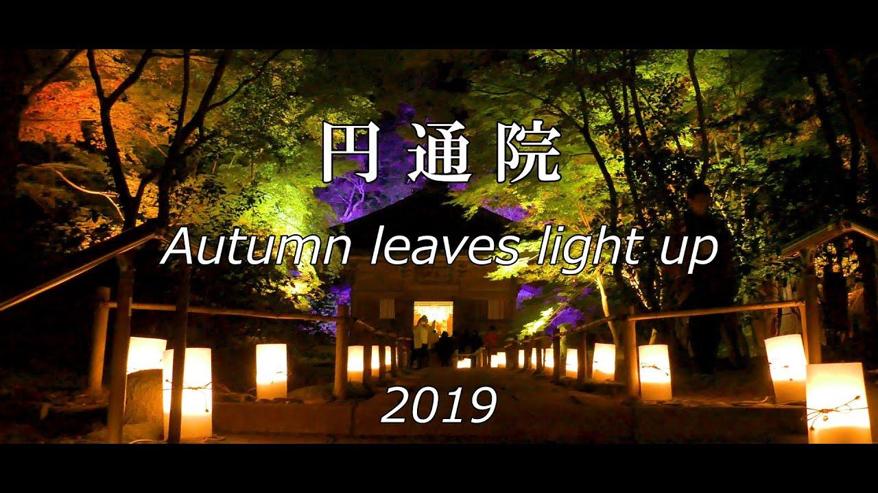 松島 ライト アップ 2019