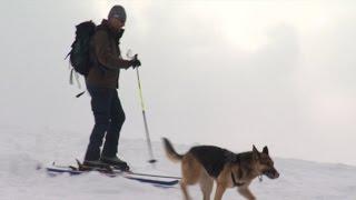 Как собаки спасают людей из-под снежных завалов?