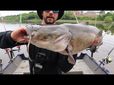 We Caught A TON Of Flathead Catfish On NEW Water