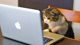 Видео приколы про кошек!Веселые любознательные кошки!