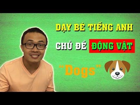 Dạy Bé Tiếng Anh Con Vật: Con Chó (Dog)