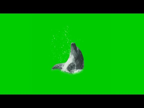 Green screen dolphin playing fx effect. Unbelievable MUST WATCH by everyone.