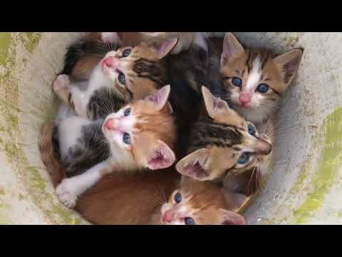 Kittens meowing (too much cuteness)