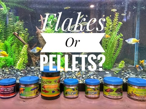 Feeding Fish: Flakes Or Pellets?