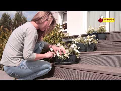 Biedronka Prezentuje Doniczki Na Kwiaty Zioła Lub