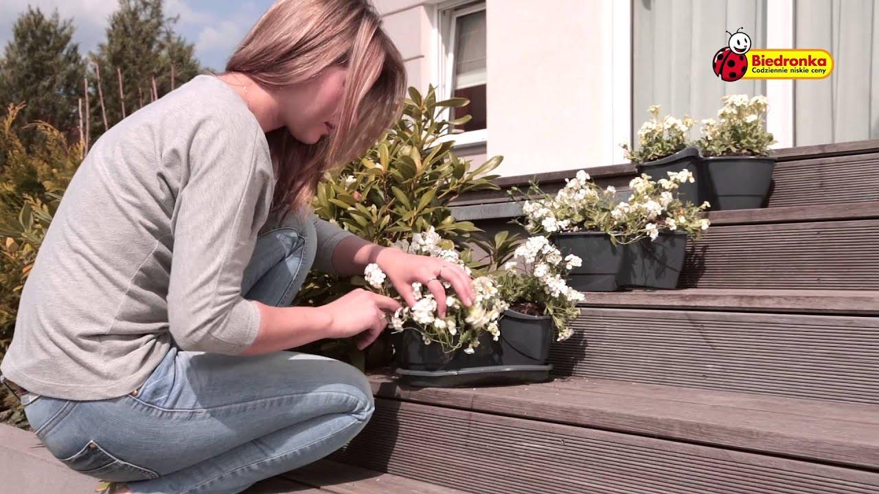 Biedronka Prezentuje Doniczki Na Kwiaty Zioła Lub Przyprawy