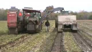 Pik Rite 190 harvesting tomatoes in muddy conditions