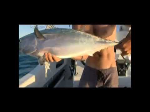 OTC S4 BABWE: Mozambique fishing - entire show: Big GT, Bluefin Trevally