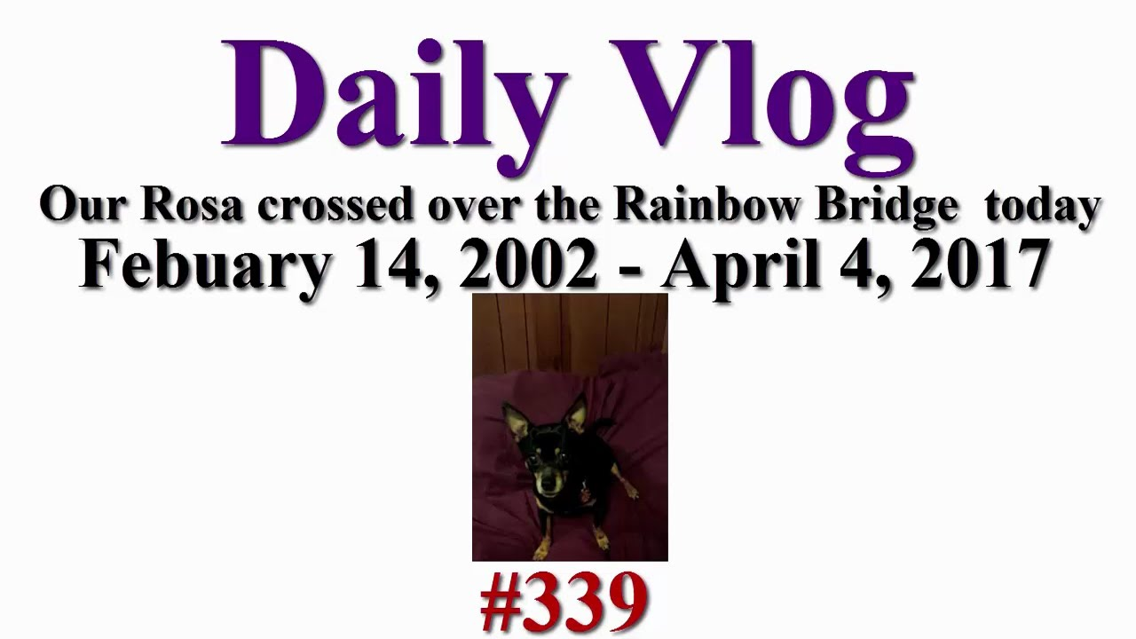 Daily Vlog 339 April 4, 2017: Rosa passed away today - YouTube