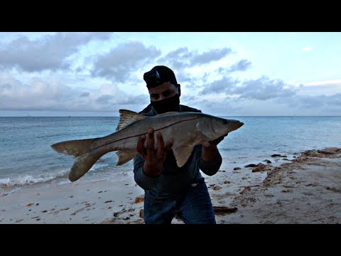 #sports #fishing SwimBait For Snook & Catch And Release ||Ep82