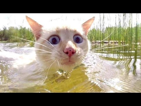 This is SO FUNNY that it's DANGEROUS TO WATCH - The FUNNIEST ANIMAL compilation