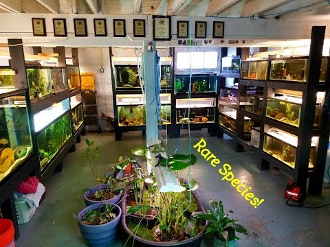 Tour An AWARD WINNING Fish Room...Stick Around Long Enough To See The Soda Cichlids!!