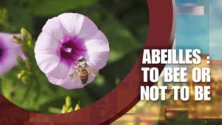 France 2  - 13h15 le dimanche 14 janvier 2018  - Abeilles to bee or not to be