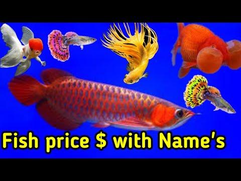 Aquarium Fish Price 2019 In India With Names | Stock Update MILAN AQUARIUM AQUARIUM Decoration Ideas