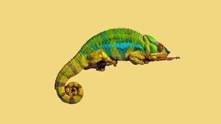 2편 이색데이트 도마뱀 구매하기 파충류 키우기 학여울 …