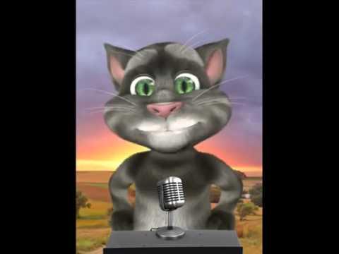 El gato tom vídeos santi