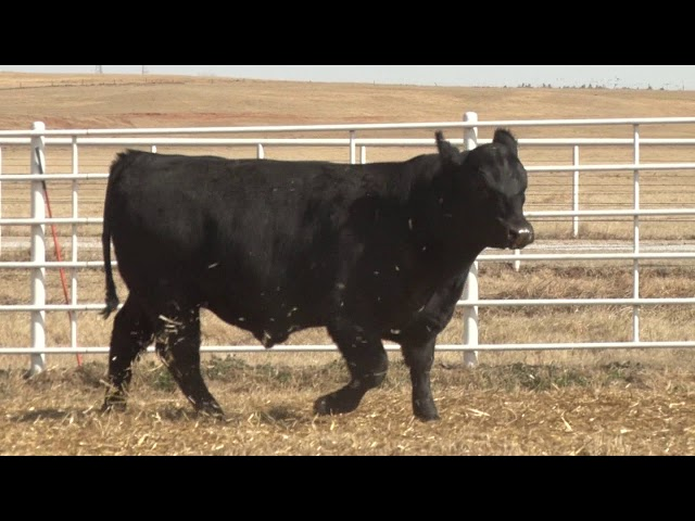 Express Ranches Lot 530