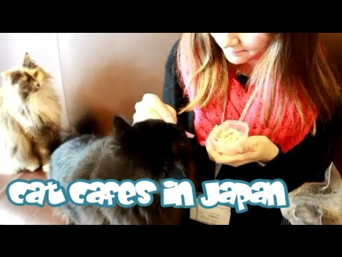 CAT CAFES in Japan! 猫カフェに行ってみました♥