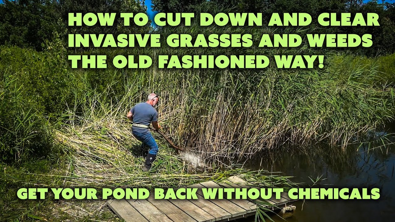 How to cut tall weeds and invasive pond grasses the old way with a how to cut tall weeds and invasive pond grasses the old way with a scythe youtube workwithnaturefo