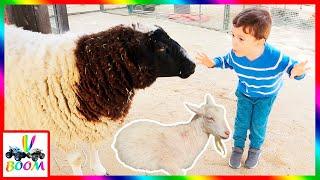 Ферма для детей! Кормим домашних животных и катаемся на тракторе на детской ферме.