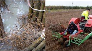 Namaczamy i sadzimy drzewka na jesieni! dr Jan Golba o zastosowaniu krzemu podczas sadzenia drzewek.