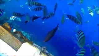 видео Отзывы об отеле » Relax Grand Sharm  (Релакс Гранд Шарм) 5* » Шарм Эль Шейх » Египет , горящие туры, отели, отзывы, фото
