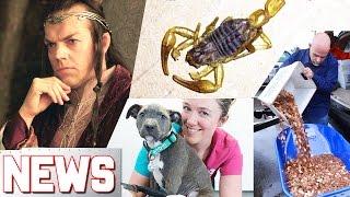 Scorpione in un pacco Amazon! - SPACE NEWS