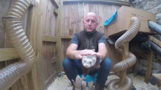 How I nip train or handle my ferrets