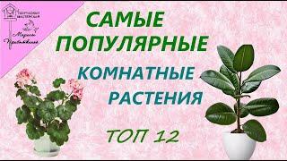 Самые популярные  домашние растения