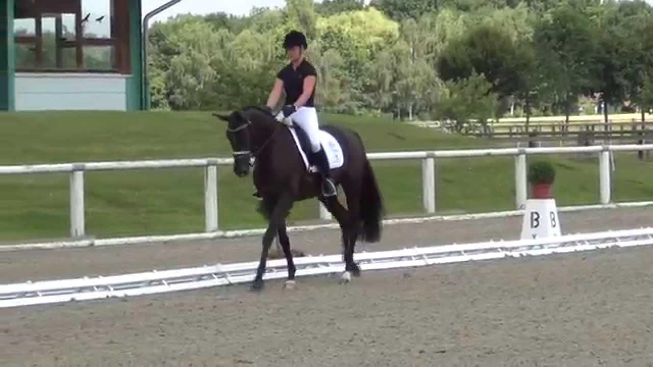 SAPHIRA ROYAL NG & Kira Wulferding - 2. Sichtung WM Junge Dressurpferde