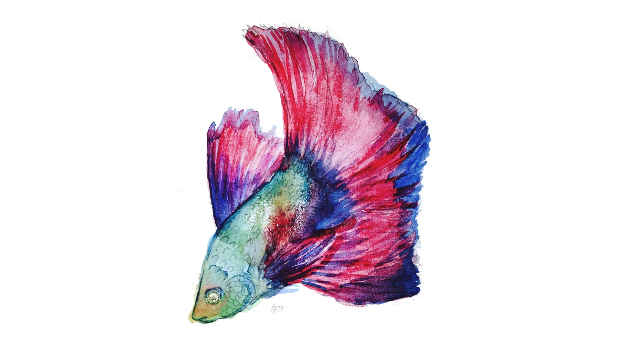 Betta fish speed painting youtube for Betta fish painting