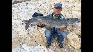 Atatürk Barajı Trofe Şabut Balığı Avı - 9 KG