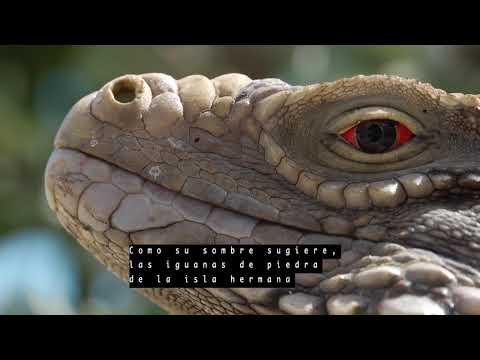 Sister Island Rock Iguana - Spanish - Expedition Notebook