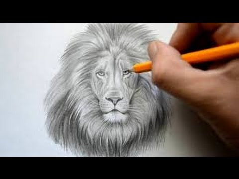 How to Draw a Lion Face: Easy way Step by Step drawing for ...