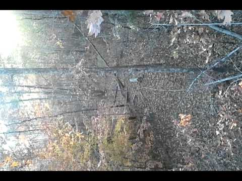 matt and daniel deer hunting