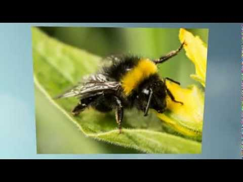 A bee video book all about bees youtube sciox Choice Image