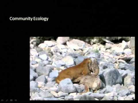 Effects of Sport Hunting on Cougar Population, Community, and Landscape Ecology