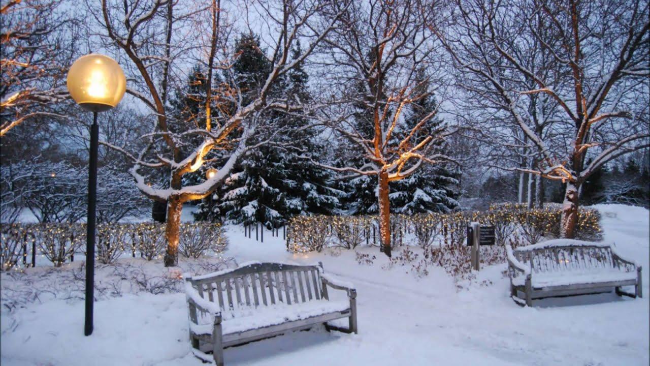 Winter S Timeless Beauty At The Chicago Botanic Garden