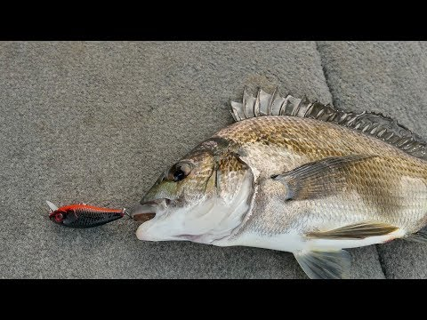 Secrets To Catching Swan River Bream On Lures Pt3