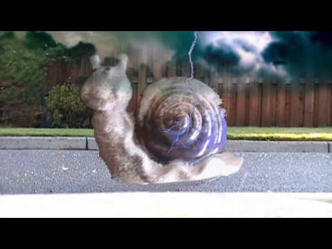 snail-hunting-with-ian
